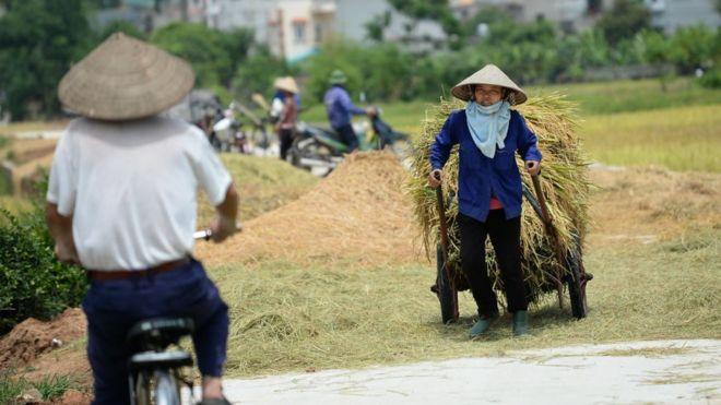 Việt Nam, đất đai