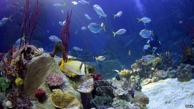 Benefits of aquarium in home
