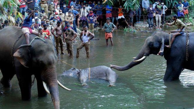 ölü fil