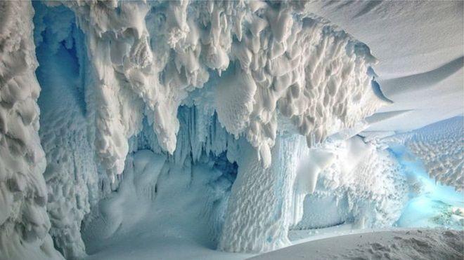 Resultado de imagem para Amostra de DNA encontrada na Antártida