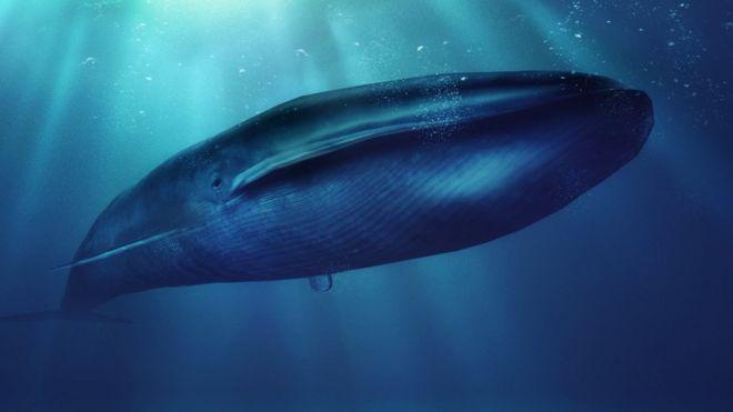 """Peligro en las redes: ¿En qué consiste """"La ballena azul""""?"""