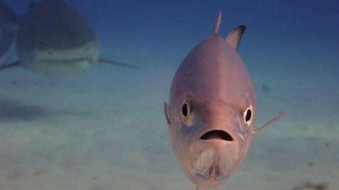 Un pez y un tiburón