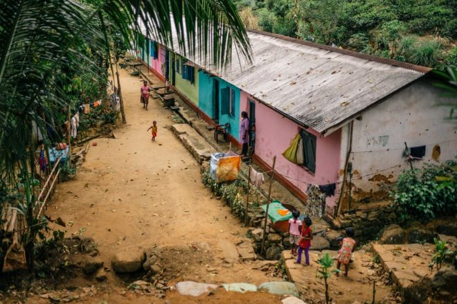Families walk outside their houses next to a tea plantation.