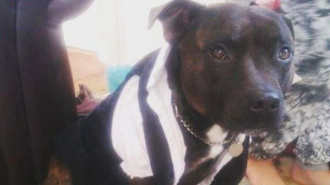 Boy guilty of kicking and punching dog to death St Ives