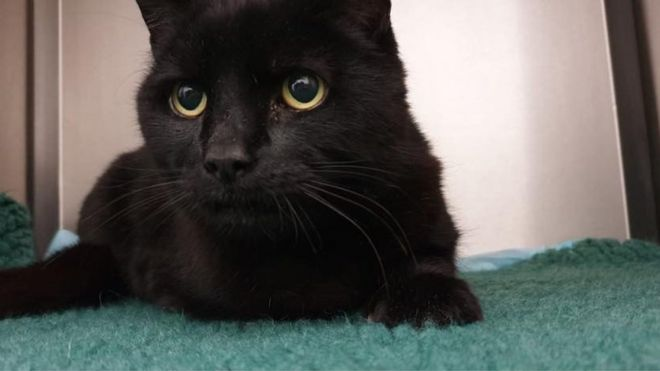 Missing black cat has Halloween reunion with owner after six