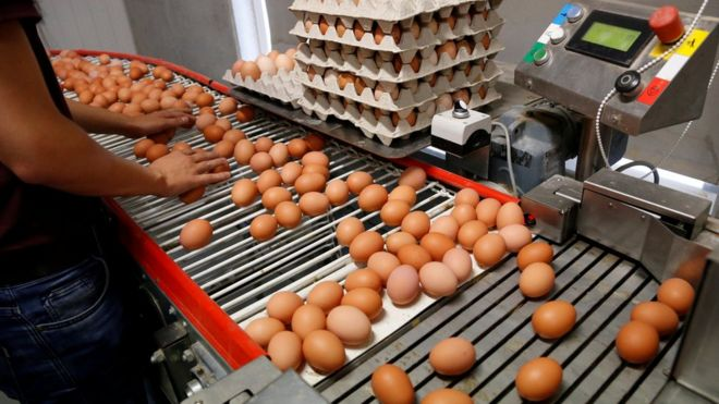 Fipronil Egg Scandal What We Know Bbc News