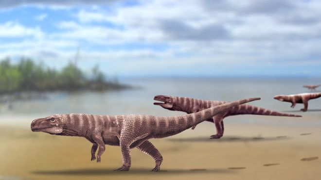 A.ROMILIO/UNIVERSITY OF QUEENSLAND Image captionAn artist's impression of what one of these creatures might have looked like