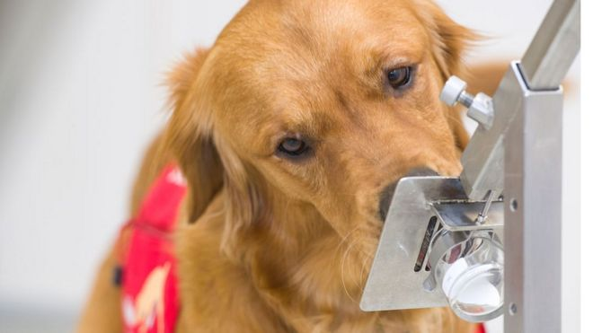 Coronavirus: Trial Begins to See If Dogs Can 'Sniff out' Virus