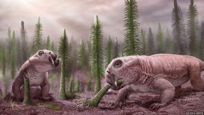 Lystrosaurus, an early relative of mammals