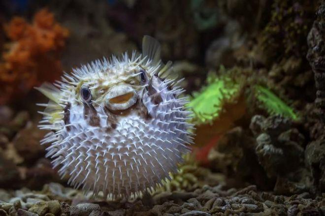55 Gambar Hewan Landak Di Indonesia Gratis Terbaik
