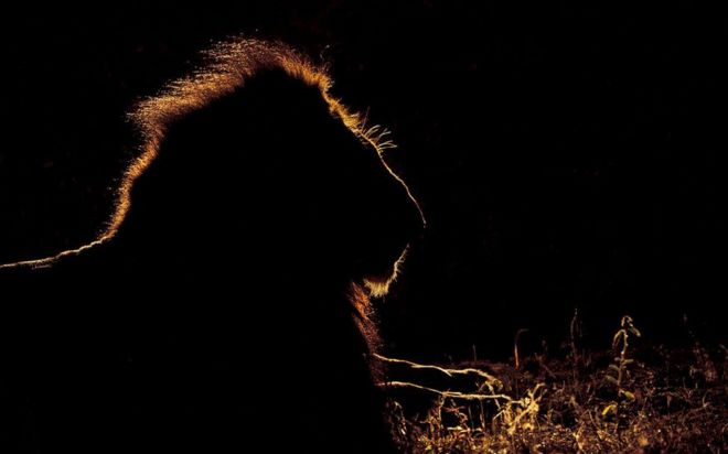ظلال حيوانات أفريقيا