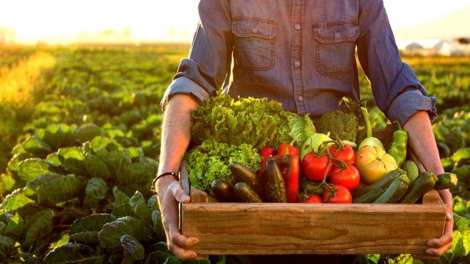 consumo de verduras en el mundo