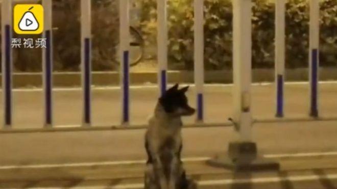 Anjing di tepi jalan.