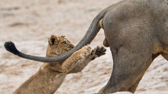 جوائز مسابقة تصوير كوميديا الحياة البرية 2019: اللقطة الفائزة