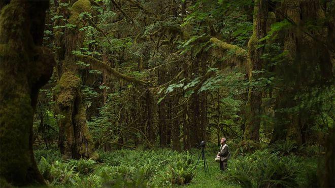 Hempton en medio de un bosque