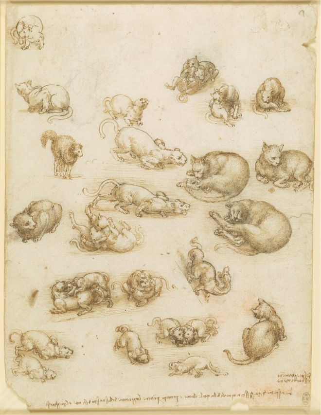 A drawing showing cats, lions and a dragon by Leonardo da Vinci