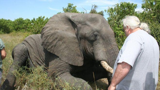 mysteries of elephant sleep revealed bbc news