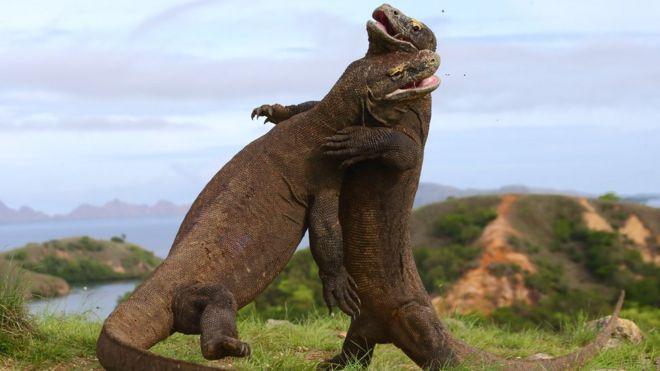 Hasil gambar untuk 3. Taman Nasional Komodo