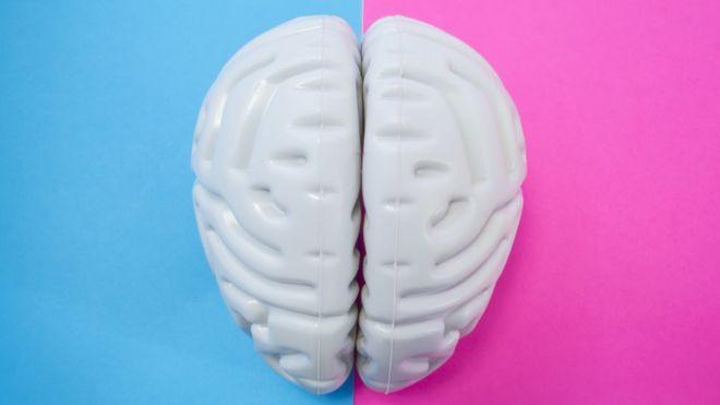 Cerebro de plástico con fondo celeste y magenta.