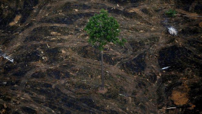 Uma árvore em meio a área desmatada perto de Porto Velho