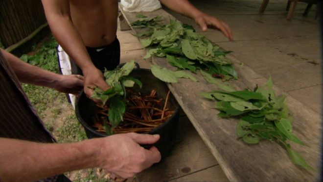 Could psychedelic drug ayahuasca have health benefits? - BBC