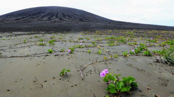 جزیره هم اکنون زیستگاه بوتههای گلهای صورتی رنگ است