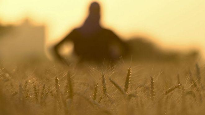 Sombra de uma pessoa em campo de trigo