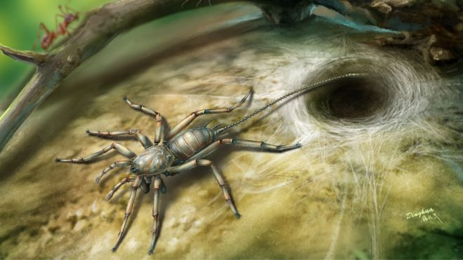 Perspectiva ilustrada do aracnídeo