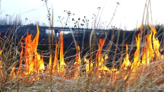 Прикарпатці продовжують масово палити траву. Рятувальники закликають зупинитися