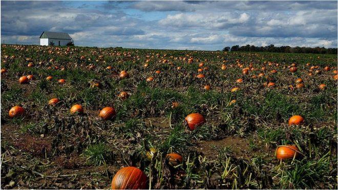Pumpkin Show 2020.What Rural Ohio Makes Of Turkey Syria Crisis Bbc News