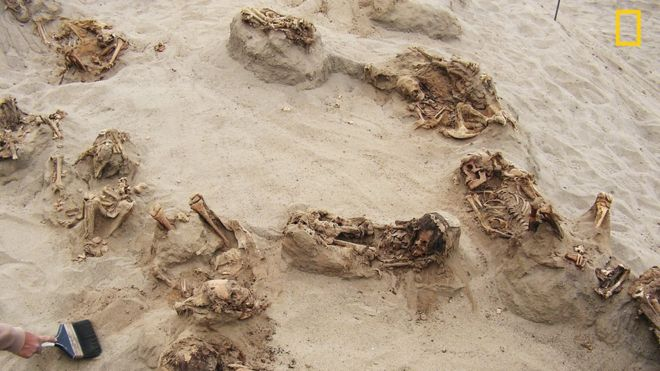 An archaeologist uses a brush in the sand between the exposed ribcages of the victims