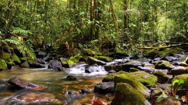 reserva biológica Maicuru