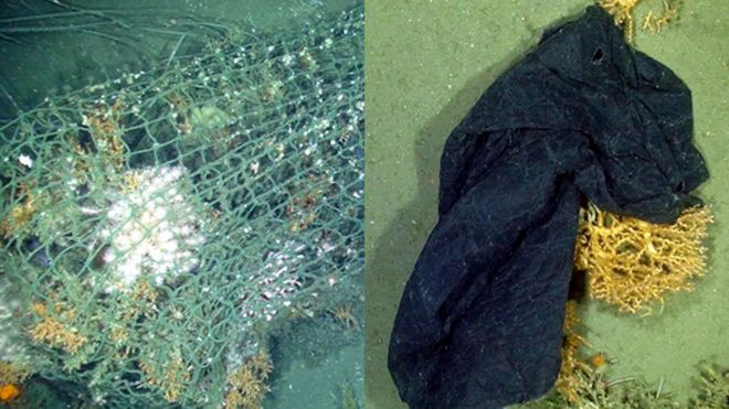 Lost fishing net and plastic bag snagged on coral