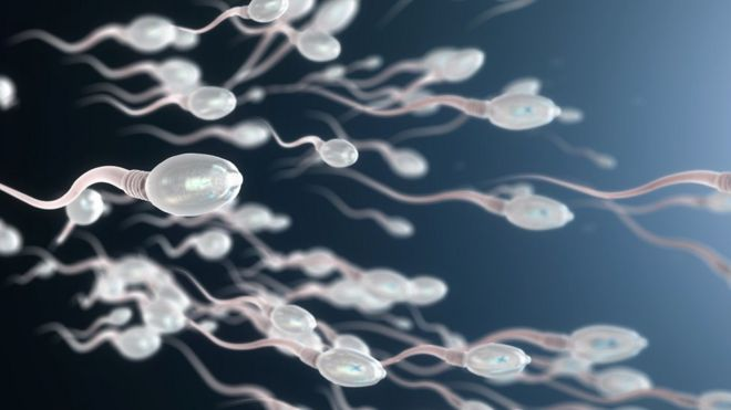 Visual representation of sperm