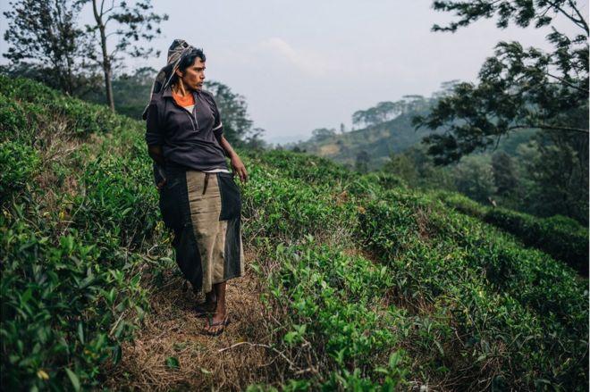 عامل في مزرعة شاي