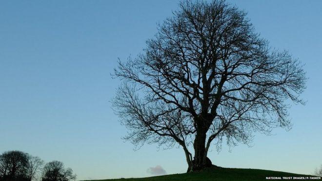 National Trust suffers 'worst year' for ash dieback _114711902_mediaitem114711899