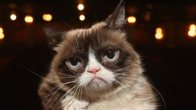 Grumpy Cat Internet Legend Dies Bbc News