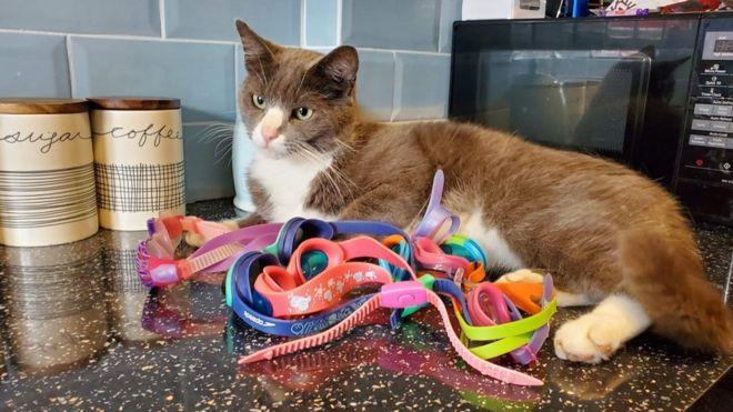 Cat Brings Home Swim Goggles