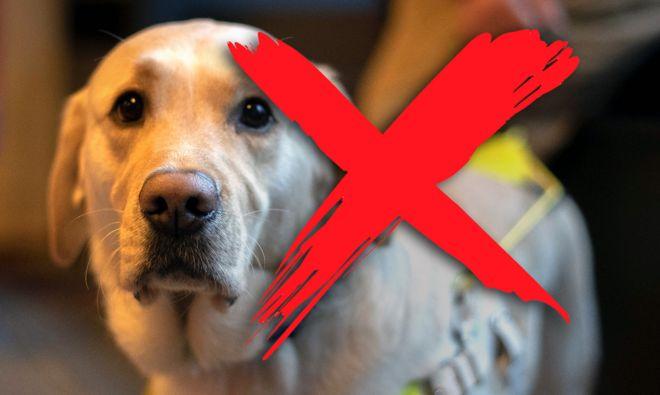 Discrimination: 'I can't take your guide dog, I've got an