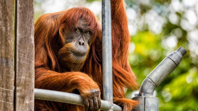 پوان ۵۰ سال پیش به باغ وحش پرت منتقل شد