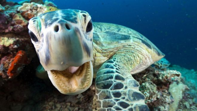 Blue Planet II: 22 things to know about the new series - BBC