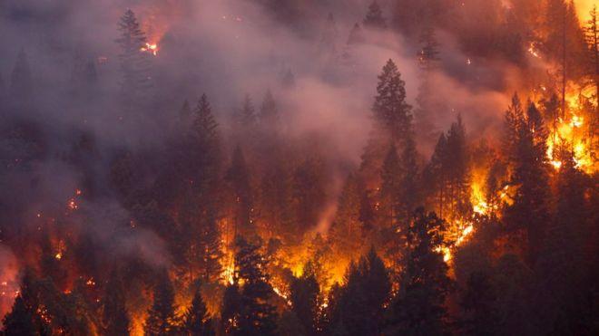 veroorzaken bosbrand