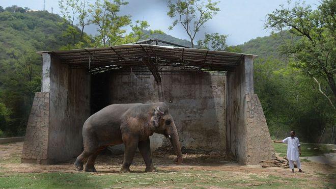 Kaavan con su cuidador en el refugio del zoológico de Marghazar en junio de 2016.