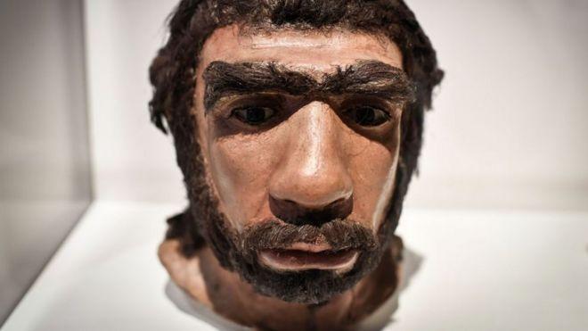 Cara neandertal