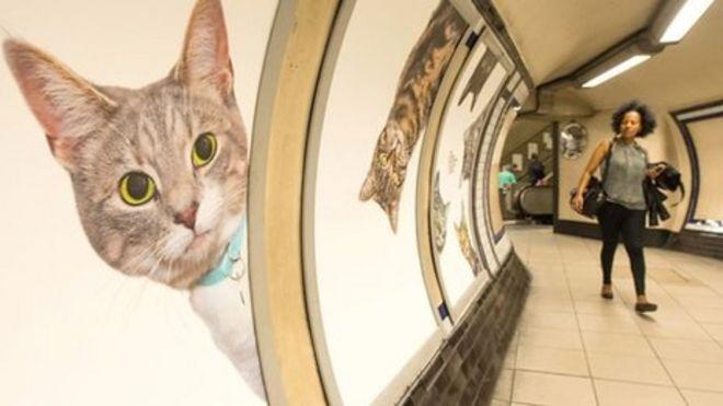 コロナ しゃべる 猫 「ちょっとコロナさん?」おしゃべり猫動画で笑って免疫力をあげよう!