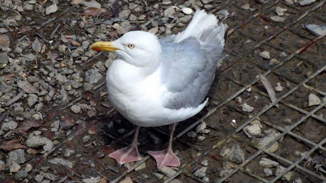 Seagulls nest at top of fire service animals rescues list