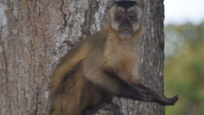 Macaco com a pata estendida