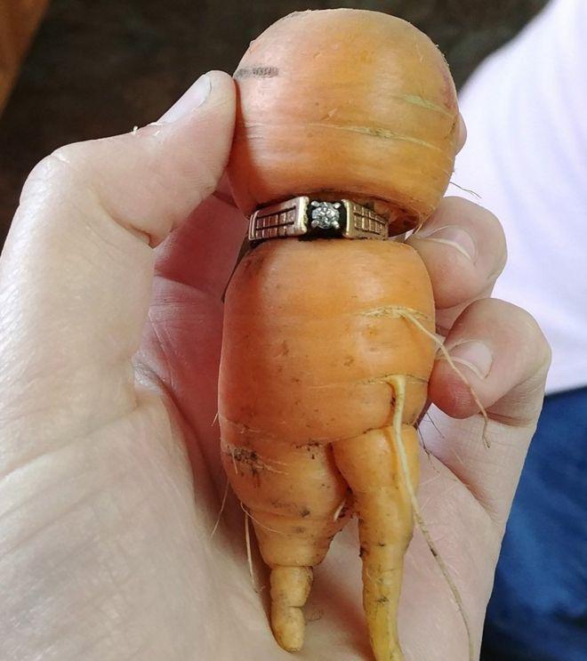 Encuentra su anillo de compromiso perdido hace 13 años… en una zanahoria