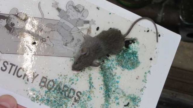 Dead mouse and droppings found in Leicester takeaway - BBC News