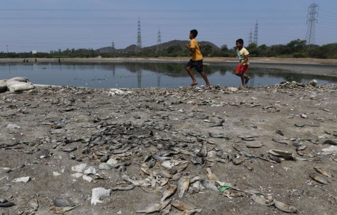 சென்னையில் ஏரி ஒன்றில் நீரில்லாமல் செத்துப்போன நூற்றுக்கணக்கான மீன்கள்